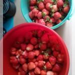 6 erdbeeren im eimer